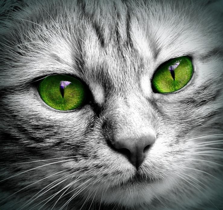 Magnetisme pour vos animaux de compagnie